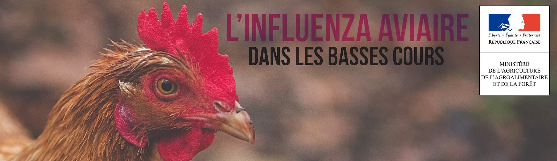 Renforcement des mesures face à Influenza Aviaire en basse cours