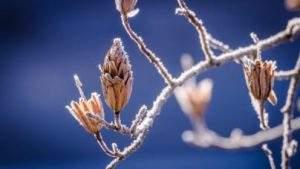 hiver ecologie economie