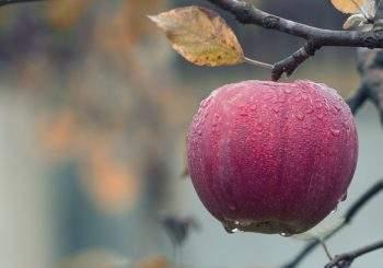 Intempéries et difficultés : les aides fiscales agricoles