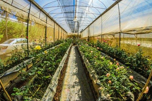 Réunion publique sur l'environnement « contre les produits phytosanitaires »