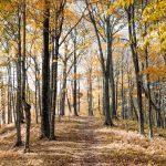 une forêt et massif forestier en Vaucluse et dans la commune de Faucon