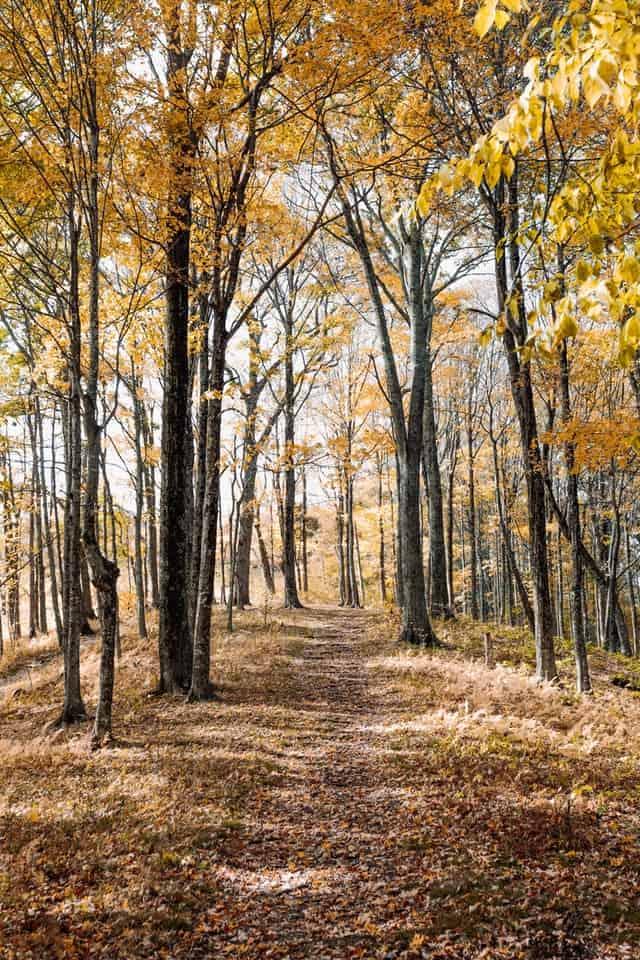 Interdiction temporaire d'accès aux massifs forestiers et d'emploi du feu