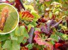 Campagne 2021 de lutte contre la flavescence dorée de la vigne