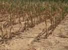 Vigilance sécheresse pour le Vaucluse