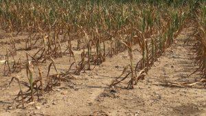 la sécheresse en Vaucluse