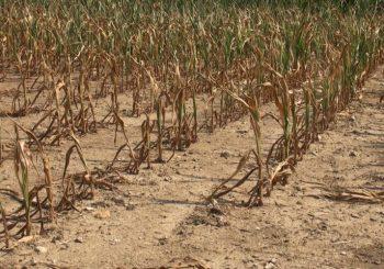 Sécheresse : Extension des mesures de restriction de l'usage de l'eau
