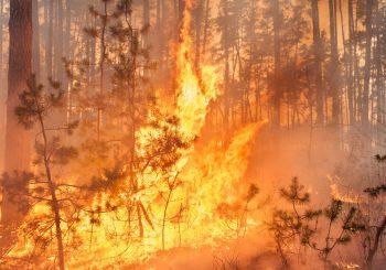 Incendie de foret à Faucon : communiqué de presse